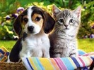Thumbnail First Aid and Emergency Care for Cats & Dogs